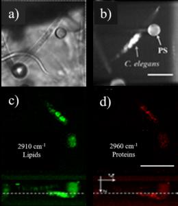 3D Raman Light Sheet micro-spectroscopy